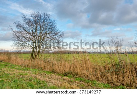 Multi-stemmed tree with bare branches in a colorful rural area with wild plants, grass and yellowed reeds. It's autumn now.
