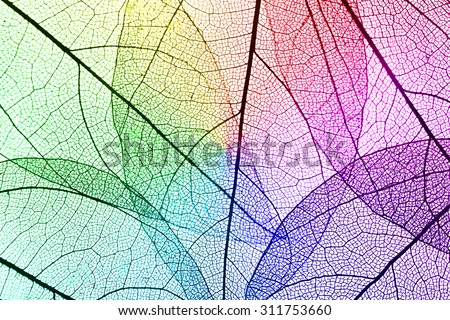 Multicolor decorative skeleton leaves background - stock photo