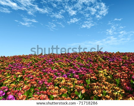 multicolor flower field