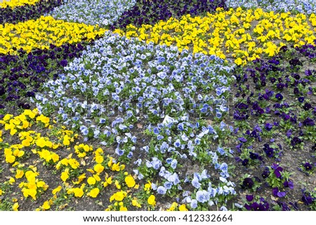 Multicolor flowerbed - stock photo