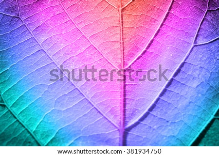 Multicolor fresh leaf, close up - stock photo