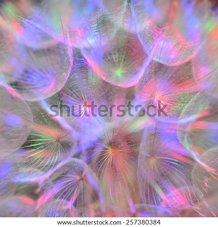 Multicolor pastel background - Vivid color abstract dandelion flower - extreme closeup with soft focus, beautiful nature details - stock photo
