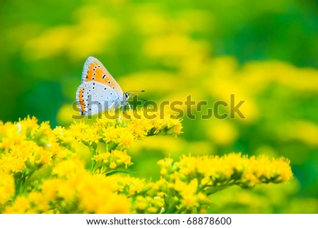 Multicolor spotted butterfly sitting on a yellow flower