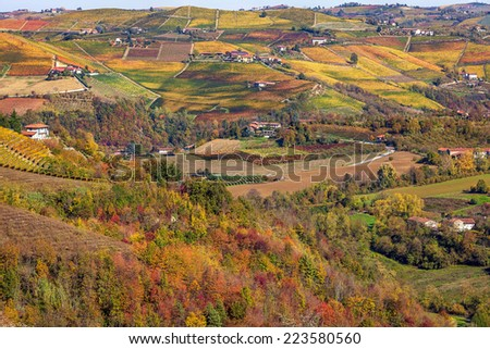 Multicolored autumnal vineyards on the hills in Piedmont, Northern Italy.