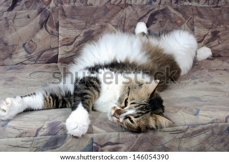 Multicolored cat lying on a sofa - stock photo