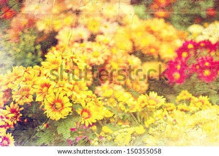 multicolored chrysanthemums. Picture in artistic retro style.