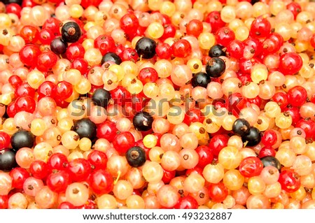Multicolored  currants for background or texture, top view.