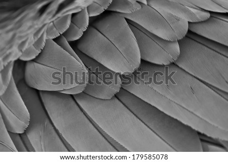 Multicolored feathers,Closeup gray feather ,background texture, abstract - stock photo