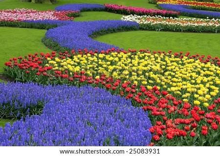 Multicolored flower bed, Keukenhof, the Netherlands - stock photo