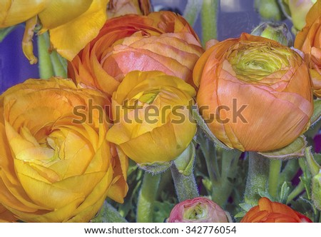 Multicolored flowers,photo art - stock photo