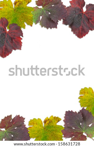 multicolored grape leaves on a white background