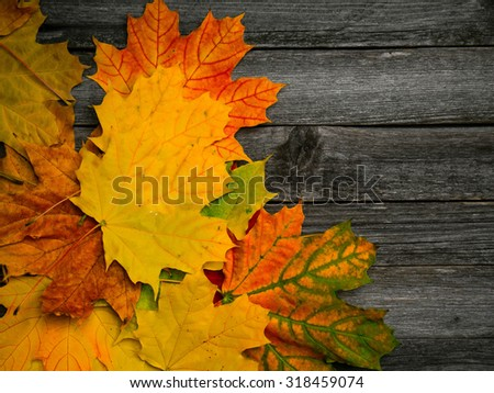Multicolored red, green and yellow autumn leaves over wooden background - stock photo