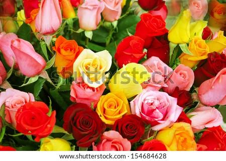 Multicolored roses  - stock photo