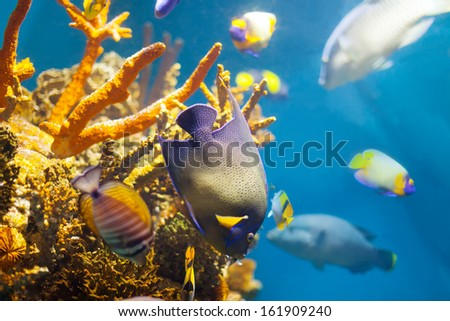 Multicolored tropical fish at coral reef in sea water - stock photo