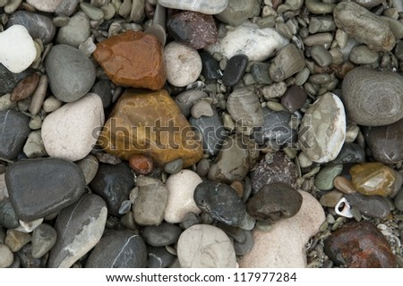 Multicolored wet quartz pebbles rounded by wave action on the beach
