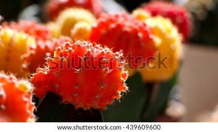 Multicolors Cactus - stock photo