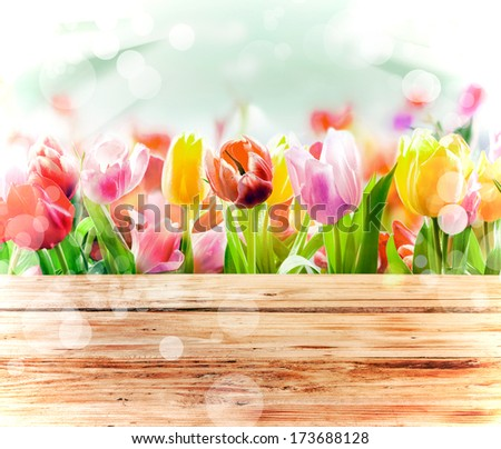 Multicoloured fresh spring tulips outdoors behind a rustic wooden fence in bright sunlight with a sparkling bokeh or dancing light - stock photo