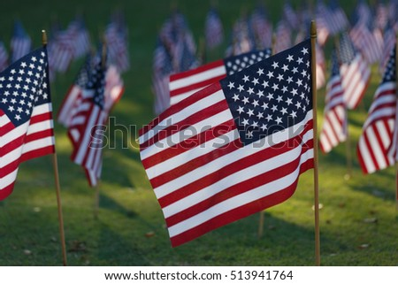 Multiple american flags on the grass.