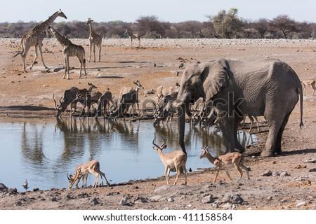 Multiple animals gathered at waterhole.  Elephant, Impala, giraffe, kudu.  Etosha National Park, Namibia - stock photo