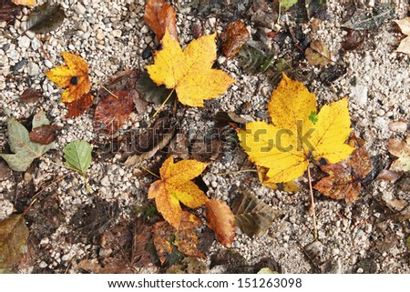 Multiple autumn leaves on the sandy road. - stock photo