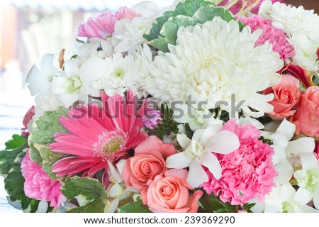 multiple bloom colorful flower - stock photo