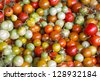 multiple color of Tomatoes. - stock photo