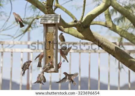 Multiple finches flying around bird feeder