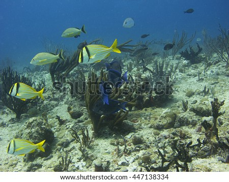 multiple school of fish swimming over a reef - stock photo