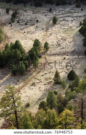 multiple trail intersection viewed from above in a meadow with pine trees