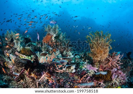 Multitudes of small, colorful fish swarm above a coral reef growing off the northern tip of Sulawesi, Indonesia. This tropical area is known for its beautiful reefs and high biological diversity. - stock photo