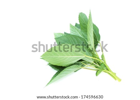 Mulukhiya - stock photo