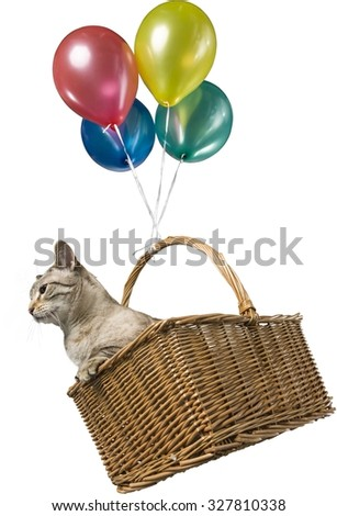 Munchkin Cat in Basket Flying with Balloons