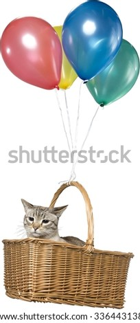 Munchkin Cat in Basket Flying with Balloons - Isolated