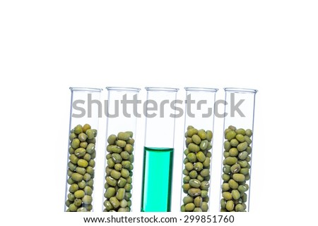 Mung Bean genetically modified, Plant Cell biotechnology - stock photo