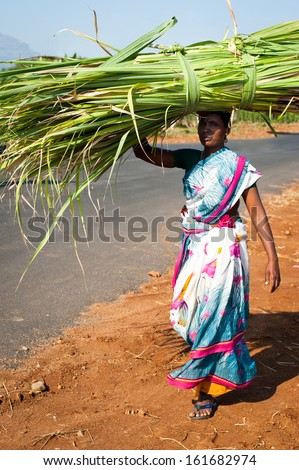MUNNAR , INDIA - FEBRUARY 17: Indian woman in colorful sari carrying hay bale on head on February 17, 2013. India, Tamil Nadu, near Munnar - stock photo