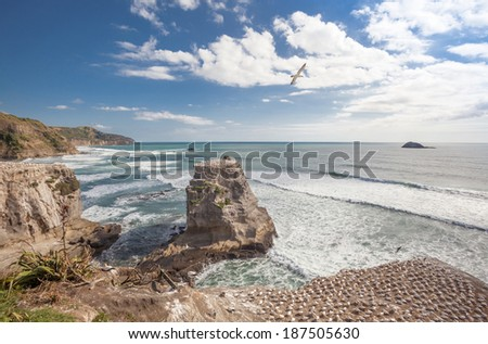 Muriwai Beach and Gannet colony on The West Coast of The North Island, Auckland, New Zealand - stock photo