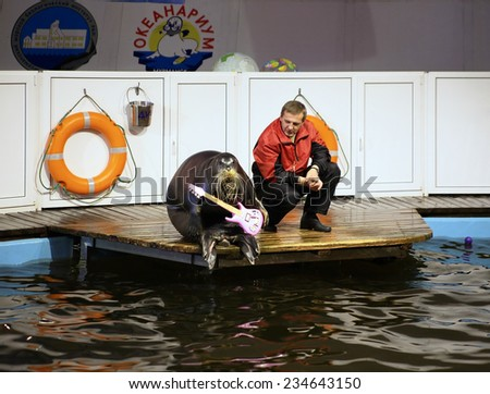 MURMANSK, RUSSIA - JULY 12, 2008: Bearded seal with guitar and his trainer in oceanarium. The Murmansk oceanarium is the northernmost oceanarium in the world, it was opened on October 4, 1996.