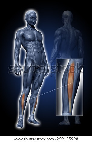 muscle body - stock photo