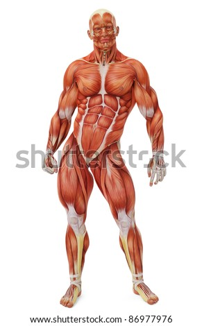 muscle man front view - stock photo