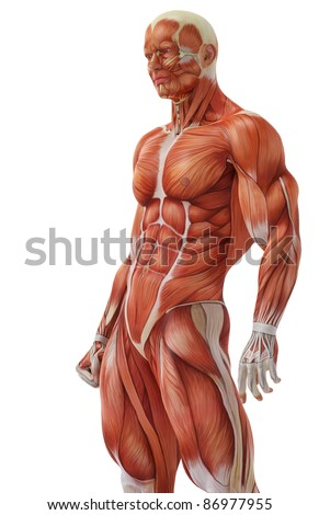 muscle man stand up - stock photo