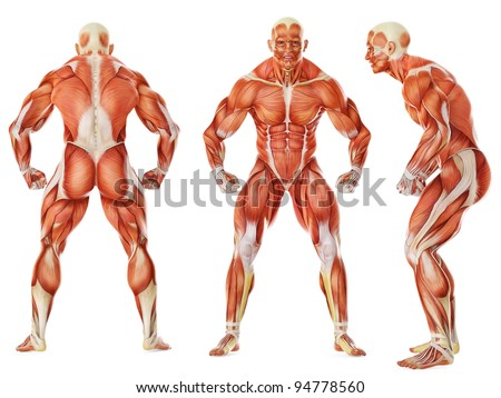 muscle man triple angry pose