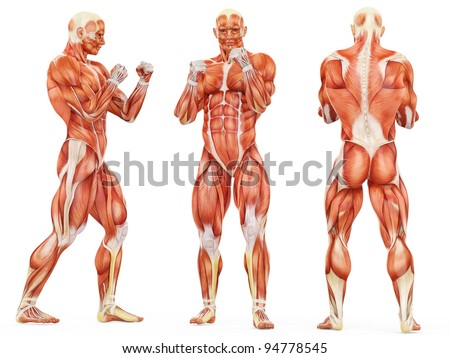 muscle man triple fighter pose - stock photo
