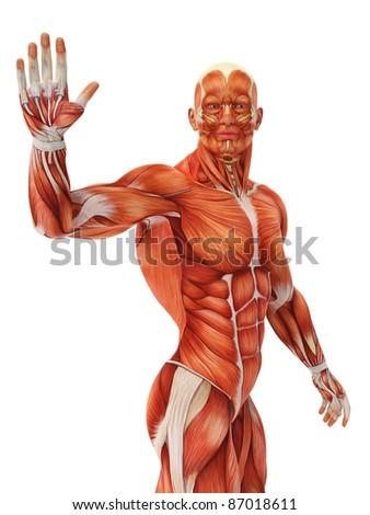 muscle man waving - stock photo