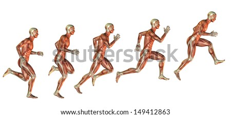 Muscle study of man in the approach to the jump