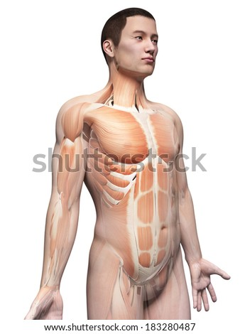 muscles of an asian male guy