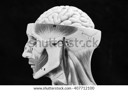 muscular of human anatomy with black and white color style - stock photo