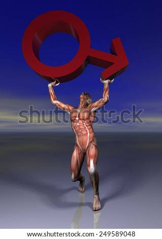 musculatura - stock photo