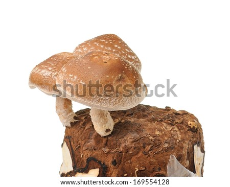 mushroom bag on white background