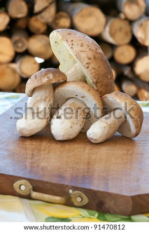 mushroom boletus edulis , fruits of the wood, Porcini