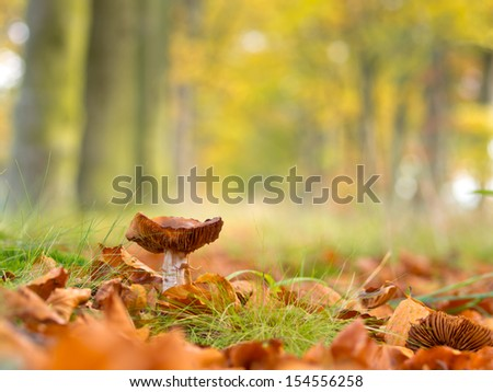 Mushroom during fall in a Forest Lane with Shallow Depth of Field - stock photo